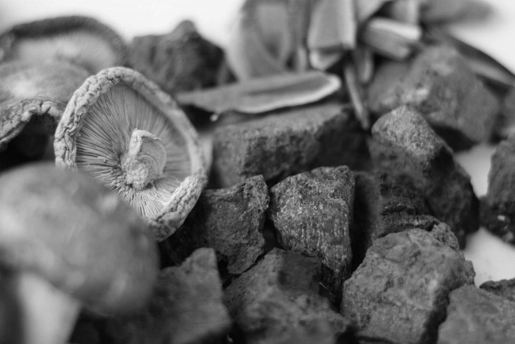 Léčivé houby / medicinální houby / adaptogeny